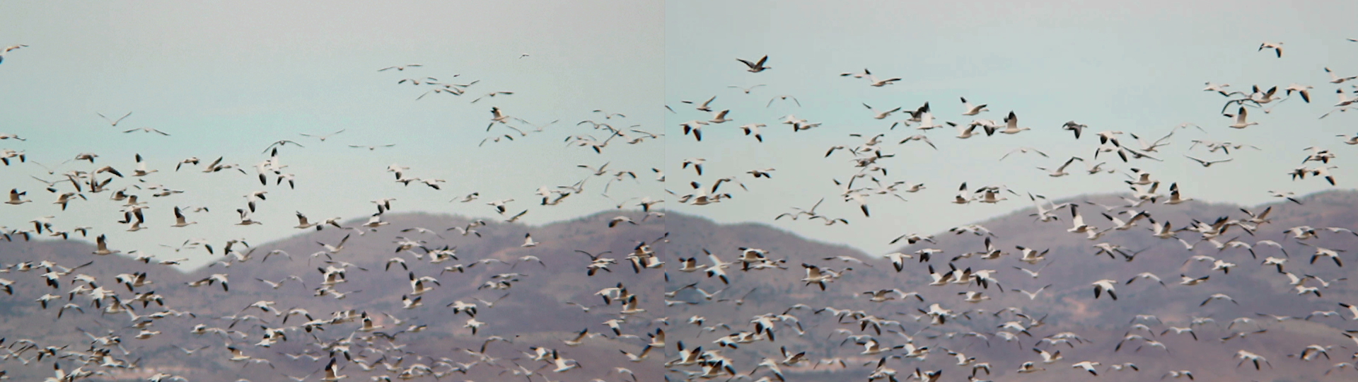 The Royal Road Project_birds_flight