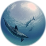 dolphins_LawrenceCurtis